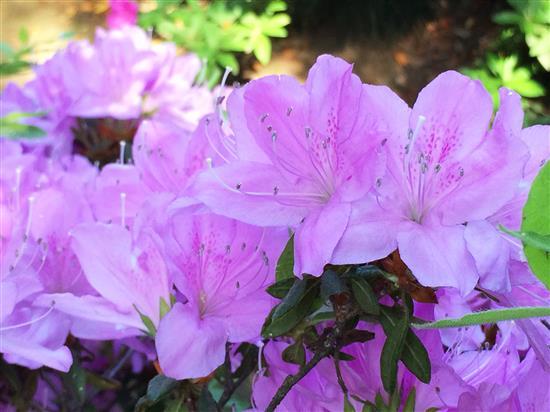 flower_097a.jpg
