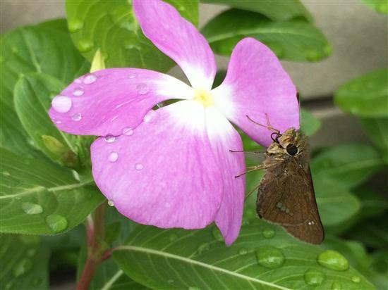 flower_104a.jpg