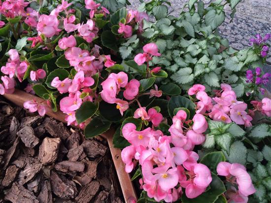 flower_140a.jpg