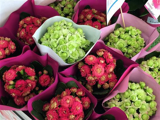 flower_153a.jpg