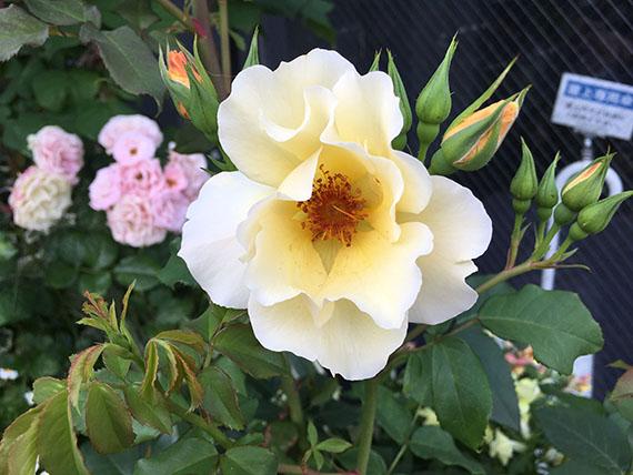 flower_1557c.jpg
