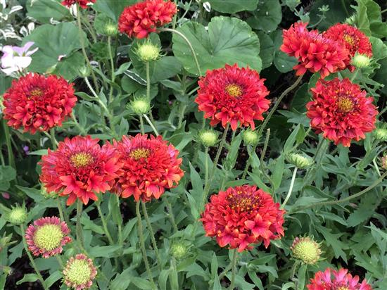 flower_156a.jpg