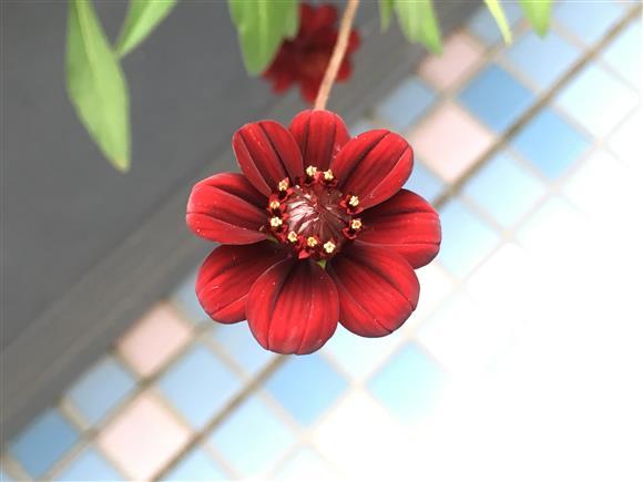 flower_1596a.jpg