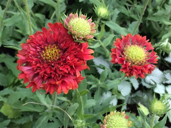 flower_159a.jpg