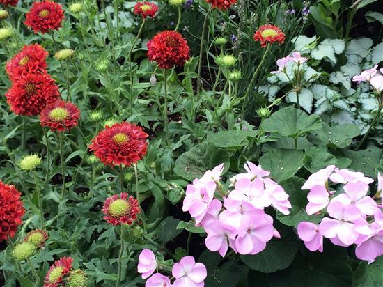 flower_162a.jpg