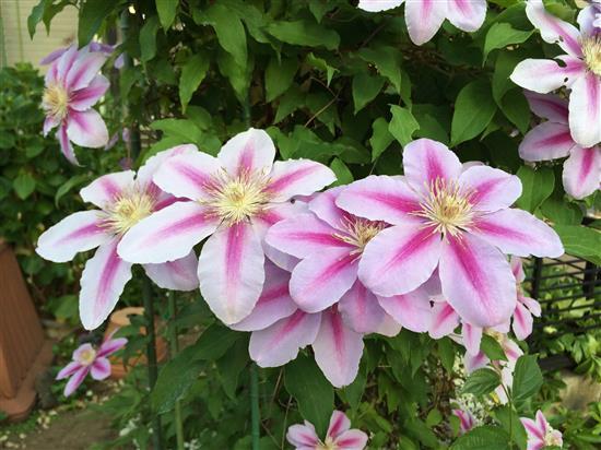 flower_182a.jpg