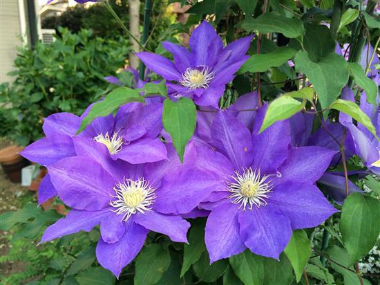 flower_184a.jpg
