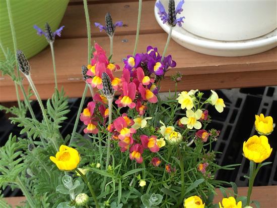 flower_232a.jpg