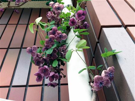 flower_2828a.jpg