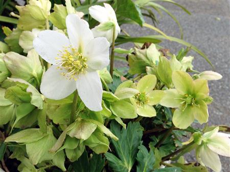 flower_2836a.jpg