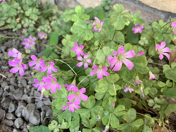 flower_3268a.jpg