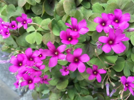 flower_3664a.jpg