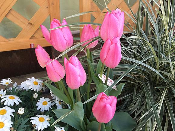 flower_3771b.jpg
