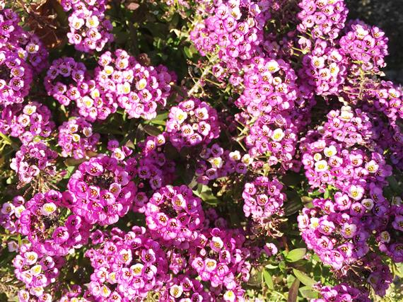 flower_4096a.jpg