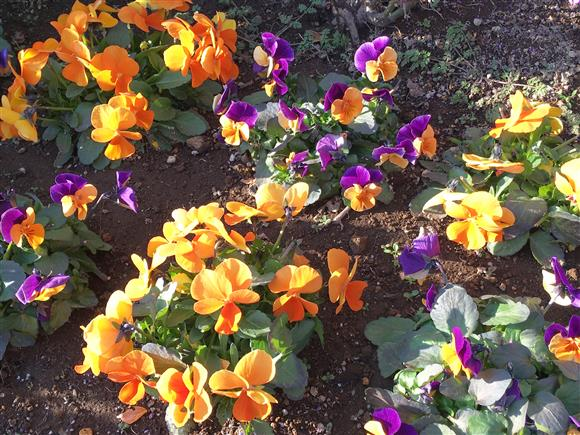flower_4112a.jpg