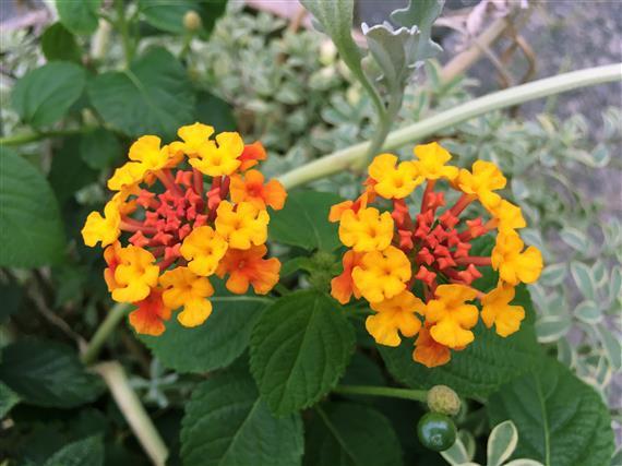 flower_4270a.jpg