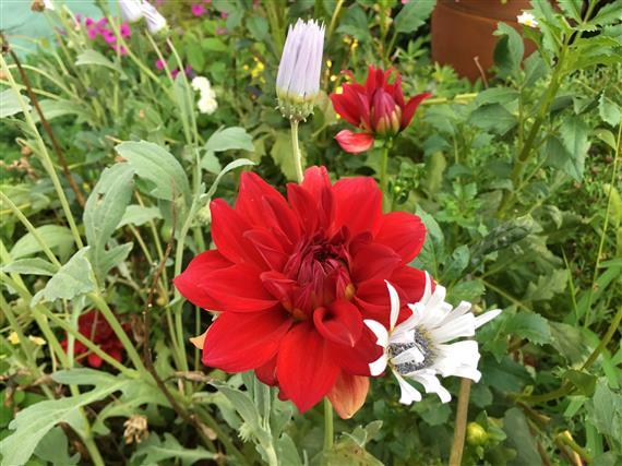 flower_4277a.jpg