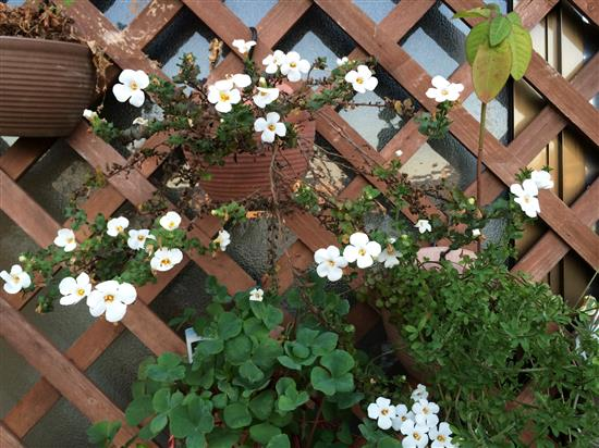 flower_4788a.jpg