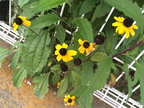 flower_4830a.jpg
