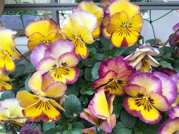flower_5595a.jpg