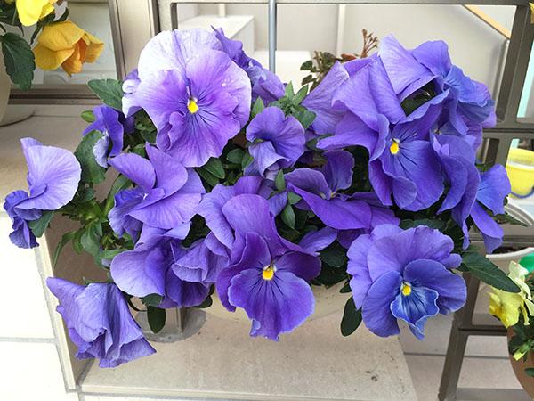 flower_6373b.jpg