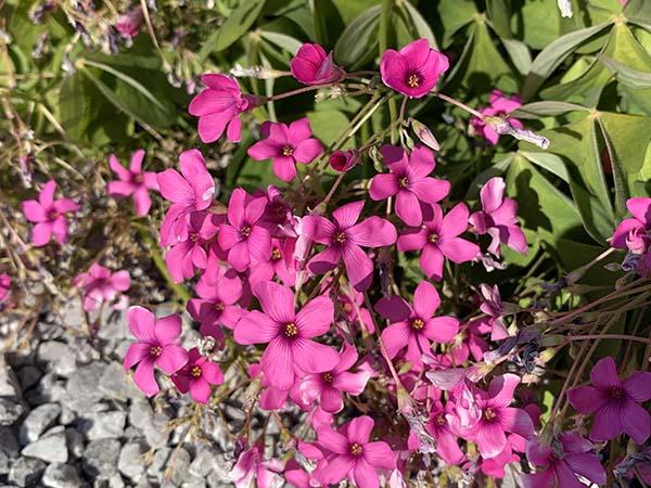 flower_6387a.jpg