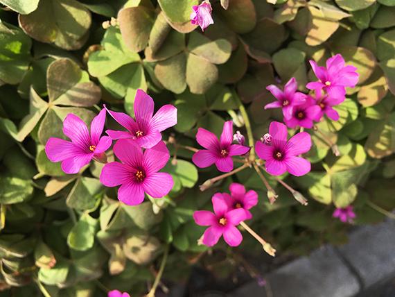 flower_6530b.jpg