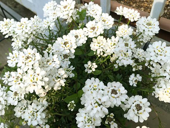 flower_6542c.jpg