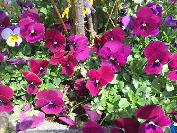 flower_6902b.jpg