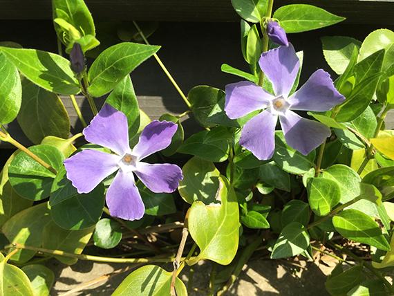 flower_6904b.jpg