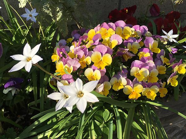 flower_6997b.jpg