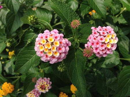 flower_7452a.jpg