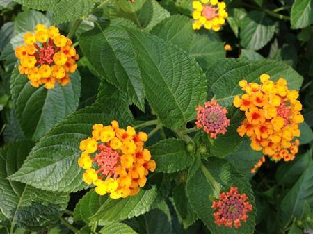 flower_7454a.jpg