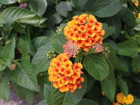 flower_7455a.jpg
