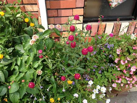 flower_7459a.jpg