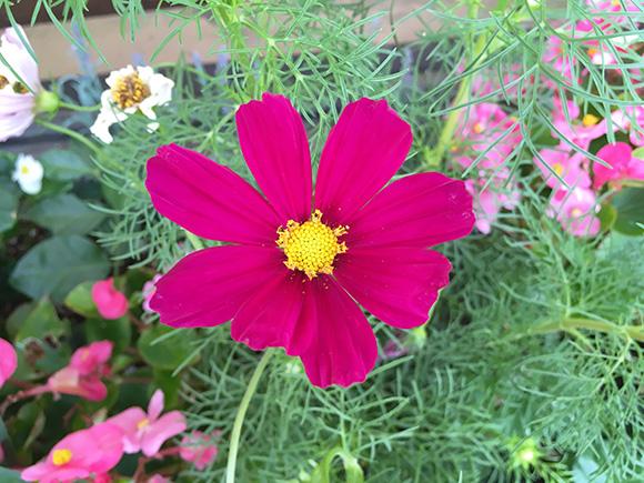 flower_7823b.jpg