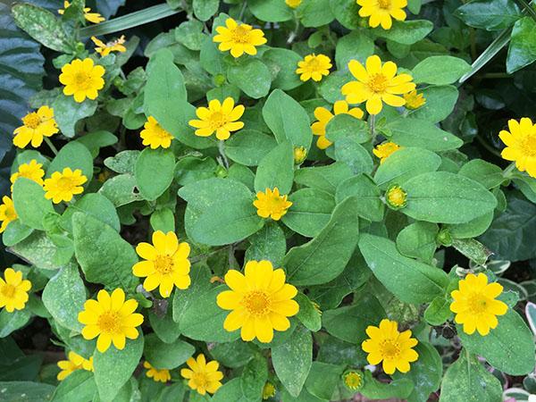 flower_7834a.jpg