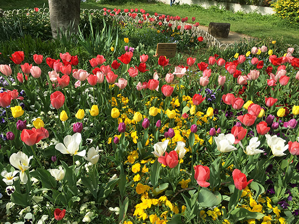 flower_7850c.jpg