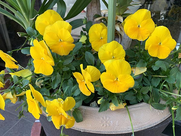 flower_7900a.jpg