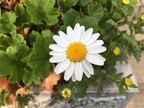 flower_8261.JPG