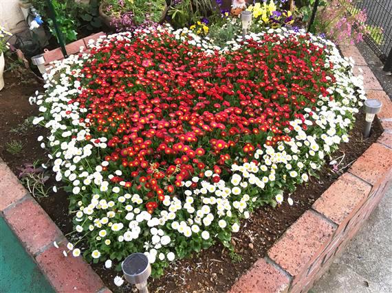 flower_8289a.jpg
