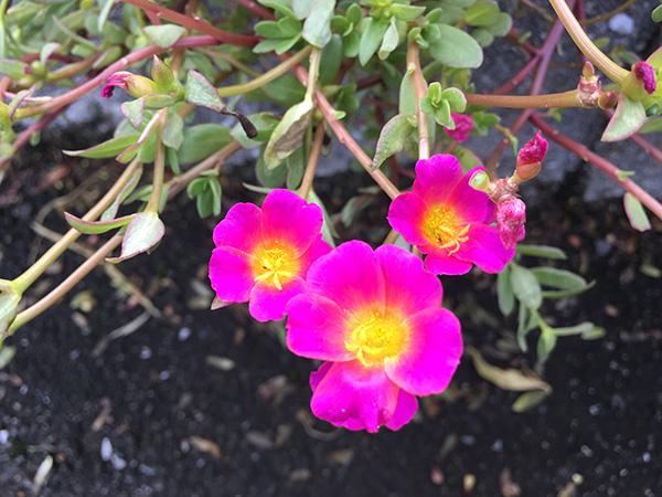 flower_8415a.jpg