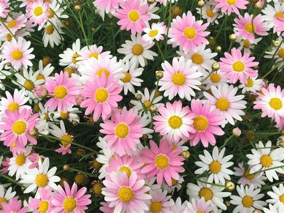 flower_8435a.jpg