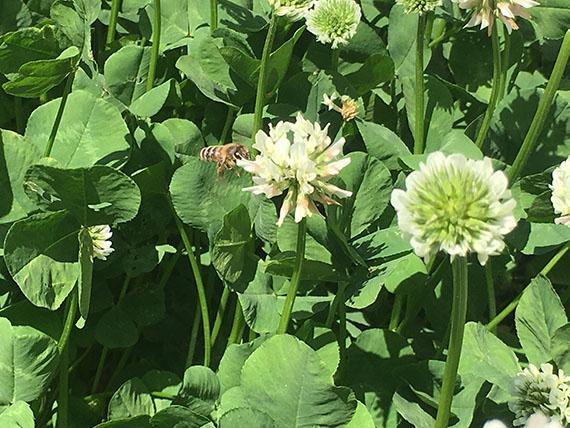 flower_9098b.jpg