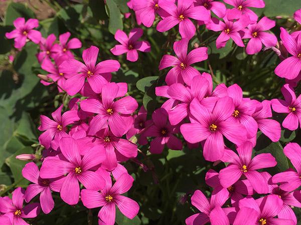 flower_9126a.jpg