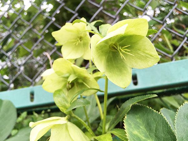 flower_9632a.jpg