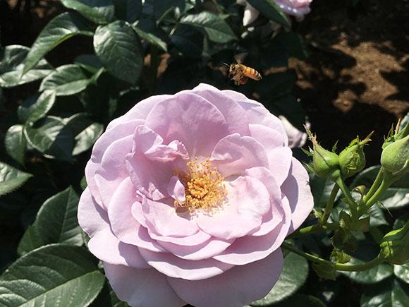 flower_9942b.jpg