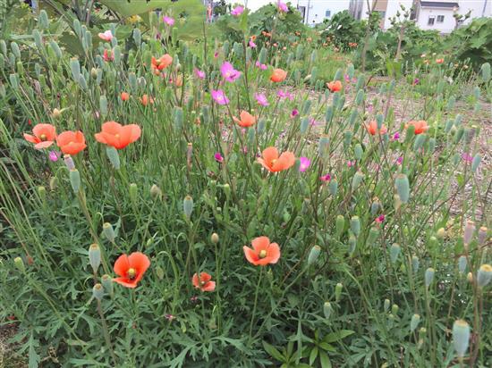 flower_IMG_8337a.jpg