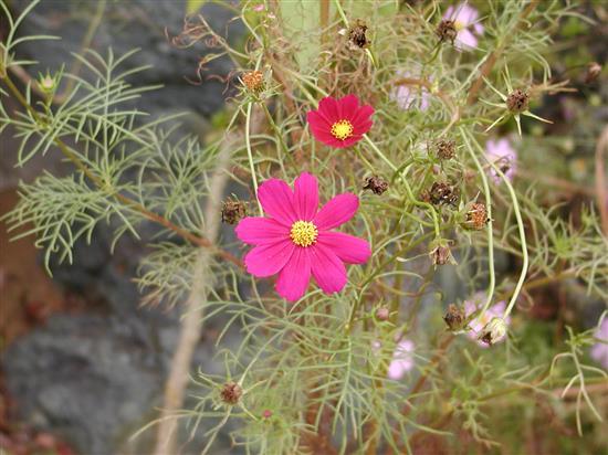 flower_P1010036a.jpg