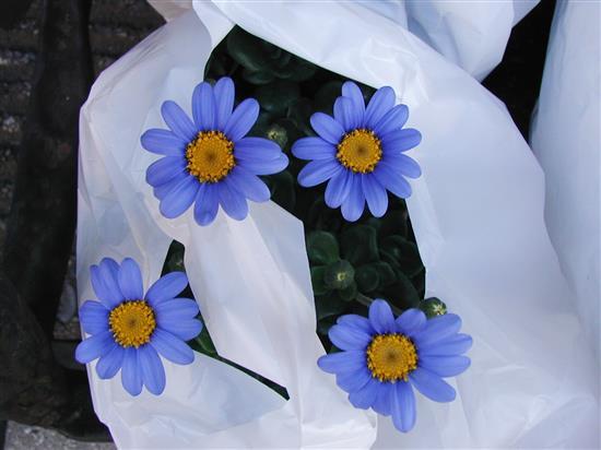 flower_P1010152a.jpg